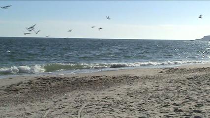 Песок, море и чайки