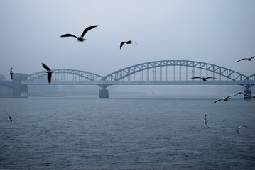 Rhein bei Köln im Nebel