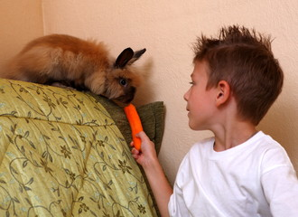 Rabbit and boy