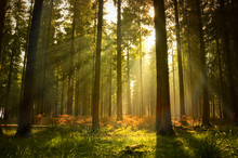 "Постер, картина, фотообои ""Beautiful Forest"""