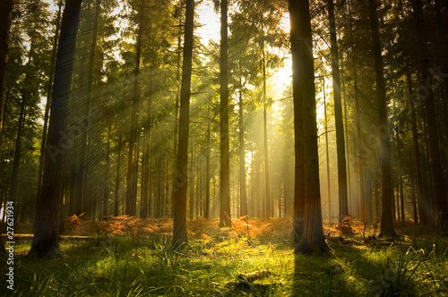 Fotobehang Platteland Beautiful Forest