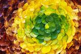 Fototapety autumn leaf spiral