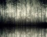 Fototapety nebel