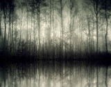 nebel - 27641169