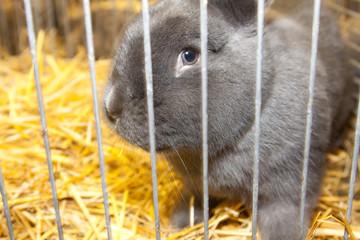 Kaninchen, Hase in Käfig