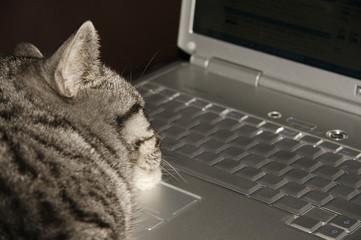 cat sleeping on keyboard