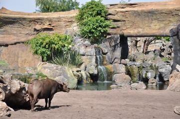 Animales del Biopark de Valencia. España.