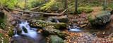 creek panorama with tree branches in forest