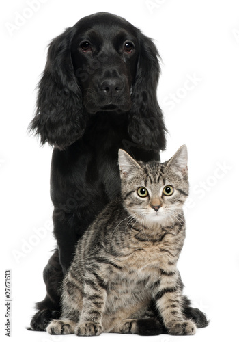 Cocker Spaniel and European Cat, 5 and 4 years old, sitting