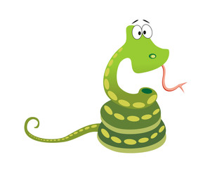 Green snake with greater eye on white background