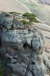 Pine trees at Demirji rocks, Ghost valley-famous landmark