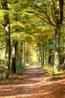 Wald Stimmung im Herbst