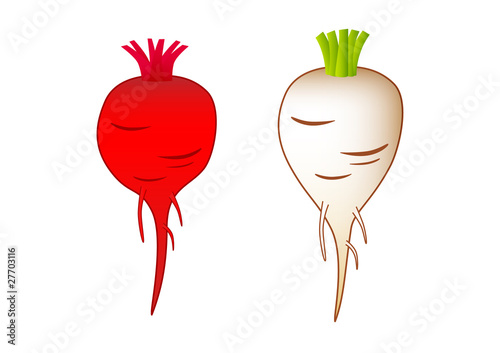 Beet-root  and sugar-beet on a white background