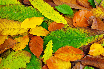 Vibrant autumn leaves