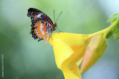 tropical butterfly sitting on a garden flower