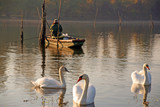 Swans and fisherman