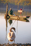 Swan and fishermen