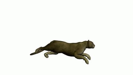 Grey Puma Running