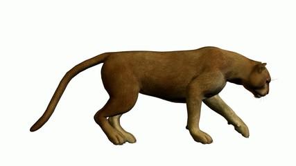 Puma Walking