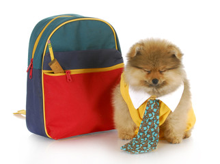cute puppy with school bag