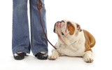 dog obedience poster