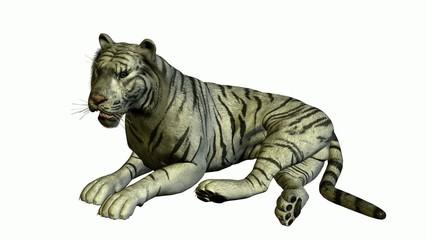 White Tiger Laying Down