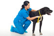 Veterinary measuring dog neck