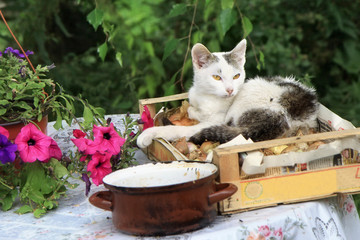 white cat with fly and pot - village still life