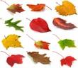 Herbstblätter Set 2