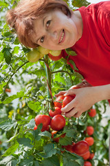 women picked tomatoes