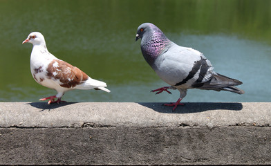 casal pombinhos