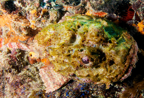 Scorpionfish, Palm Beach County Florida