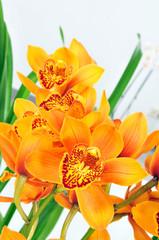 orchide - orchidee und grüne Blätter