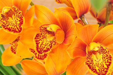 Orchidee - Blume