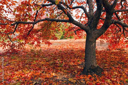 drzewo-w-upadku