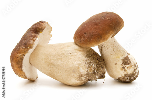 boletus edulis on white background
