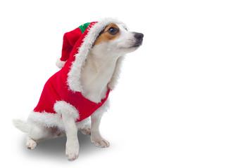 Santa Claus Woof