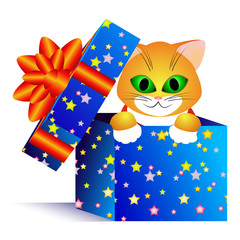 Gift and cat