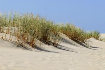 Dunes de La Coubre en Charente-Poitou, France