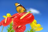 Schmetterling 92