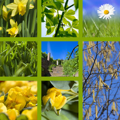 Collage spring