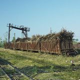 wagons full of sugar cane, sugar railway, Niquero, Cuba