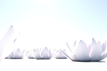 Zen loto flowers on white background