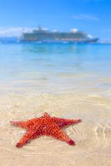 a starfish and a cruise ship