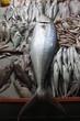 balıkçı tezgahı
