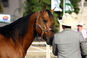 Criador de caballos