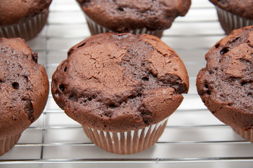 Chocolate cupcakes on cooling rack