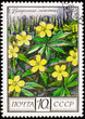 Soviet Russia Stamp Ranunculus Yellow Buttercup Oak Forest