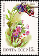 Russian Postage Stamp Flower Lungwort Plant Pulmonaria Obscura