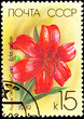 Canceled Soviet Russia Postage Stamp Red Eclat du Soir Lily